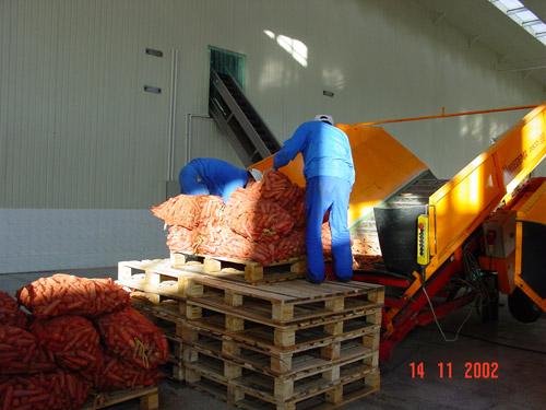 Приемка моркови для переработки
