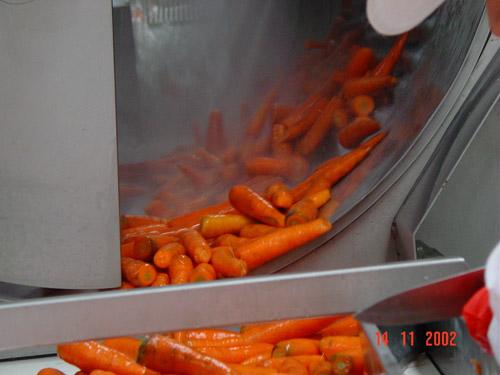 Мойка моркови в барабанной мойке
